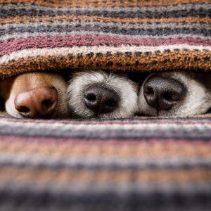 Hundedecken/-betten